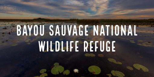 Bayou Sauvage National Wildlife Refuge