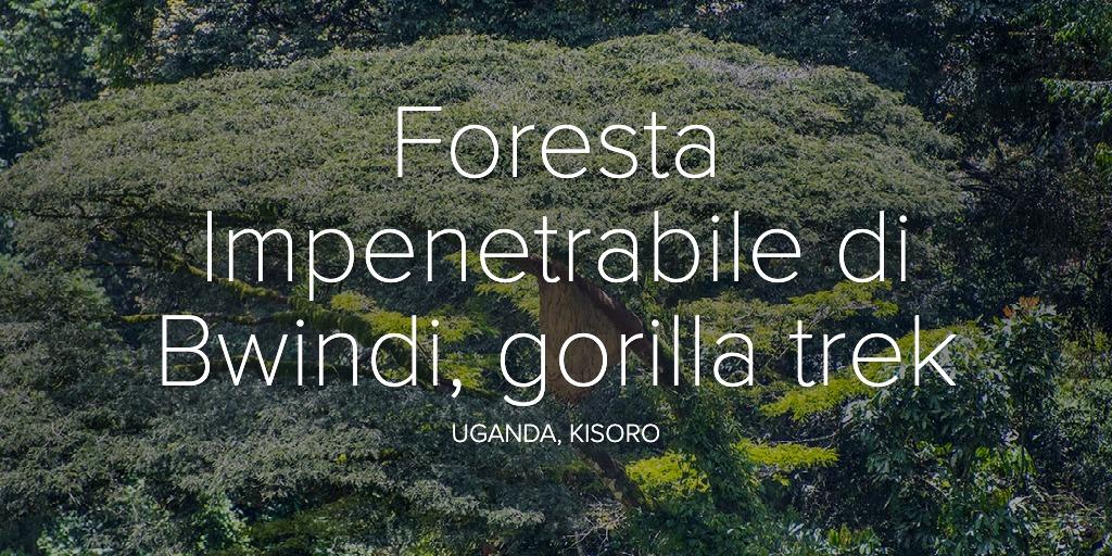 Foresta Impenetrabile di Bwindi