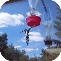 Hummingbird Decoy?
