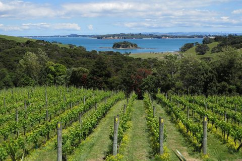 Cable Bay Vineyard and Restaurant_2