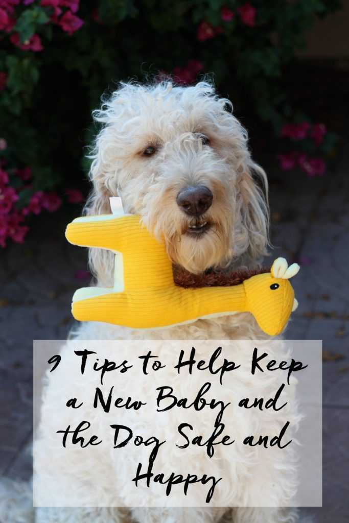 9 Tips to Help Keep New Baby and the Family Dog Safe and Happy