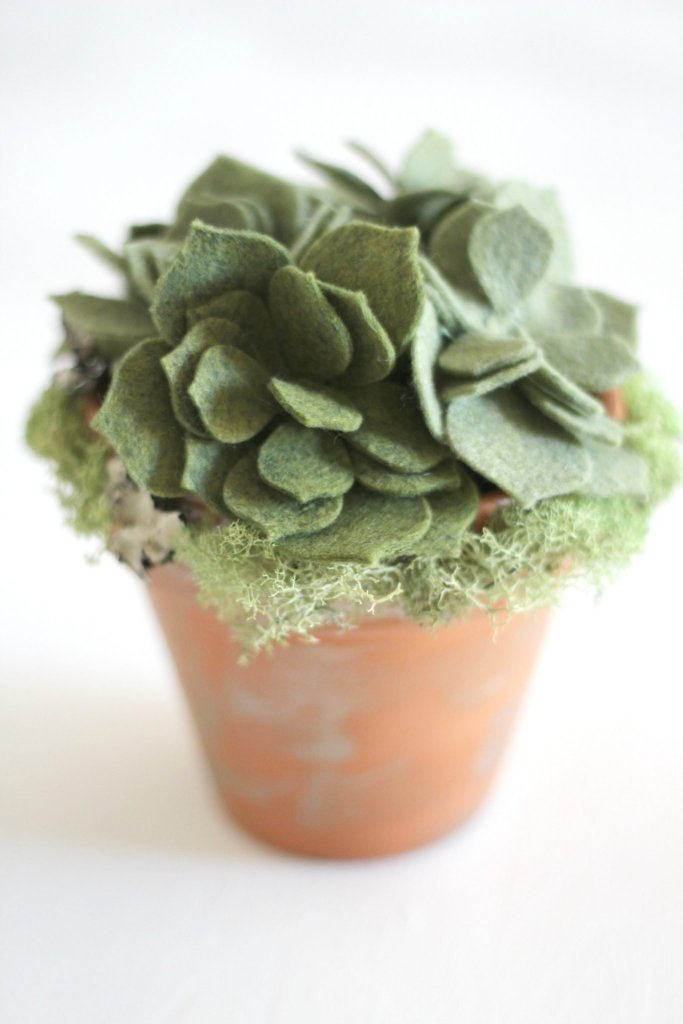 Felt succulent flower pot gifts