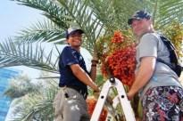Arboretum volunteers pick edible foods. Photo credit to ASU website.