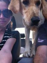 this one loves a car trip