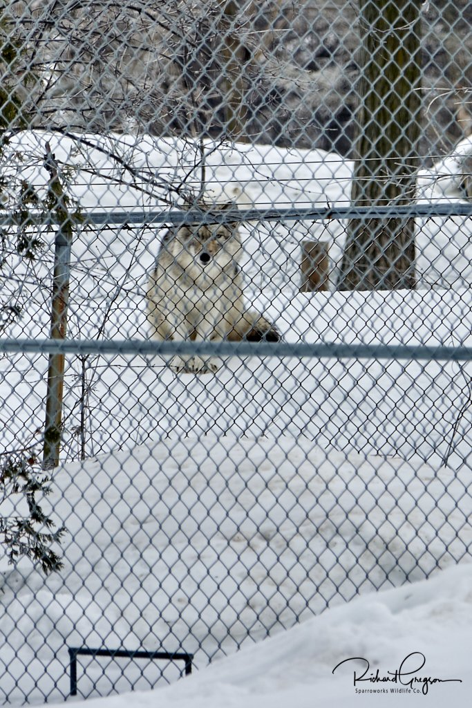 Security officer at the back gate of the EcoMuseum