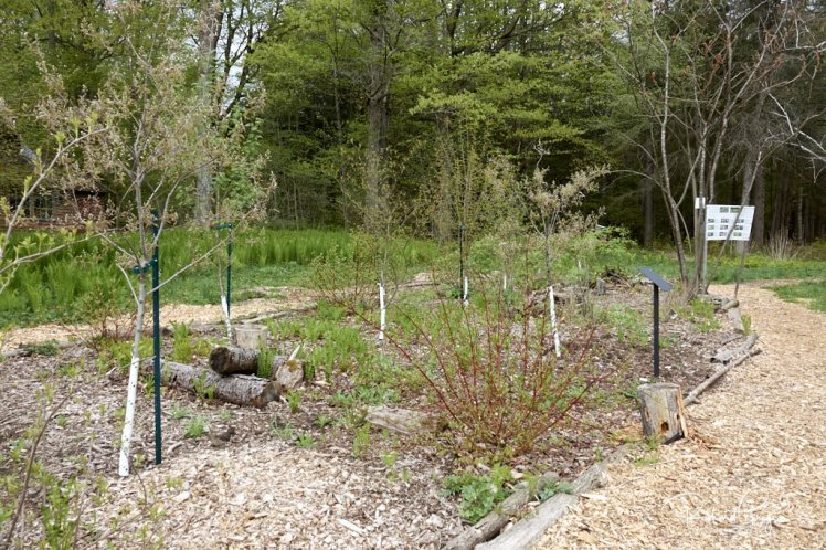 (11) The Copse ... planted in 2017 for Canada's 150th anniversary