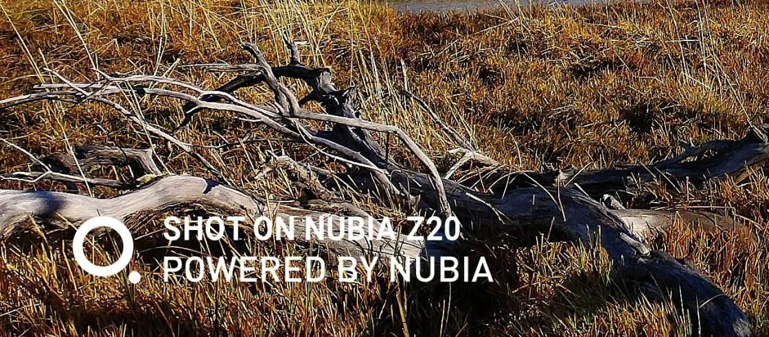 Nubia Z20 Camera Sample