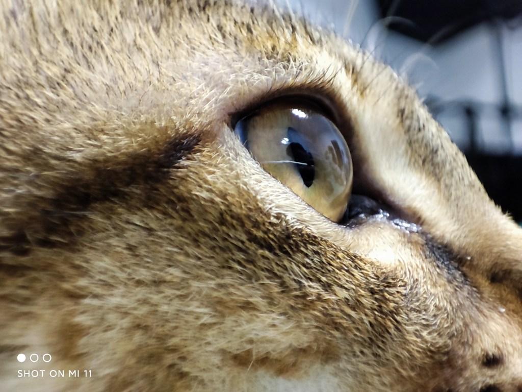 Xiaomi 11 Camera Samples: 5-megapixels telephoto macro
