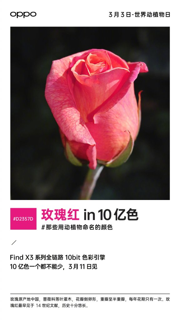 Oppo Find X3 Pro Camera Samples