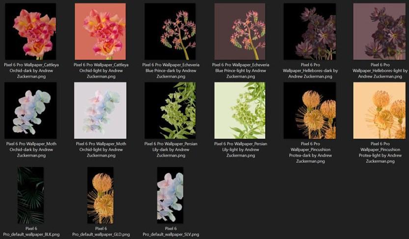 Download Google Pixel 6 Pro Wallpapers of Plants