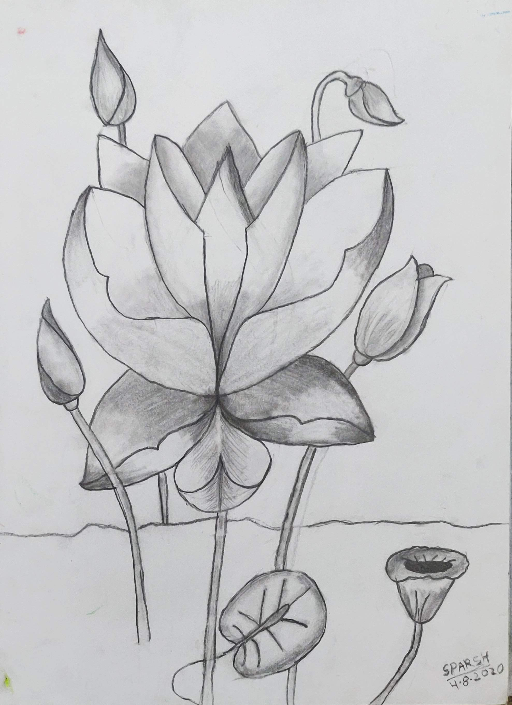 How to sketch a lotus with pencil