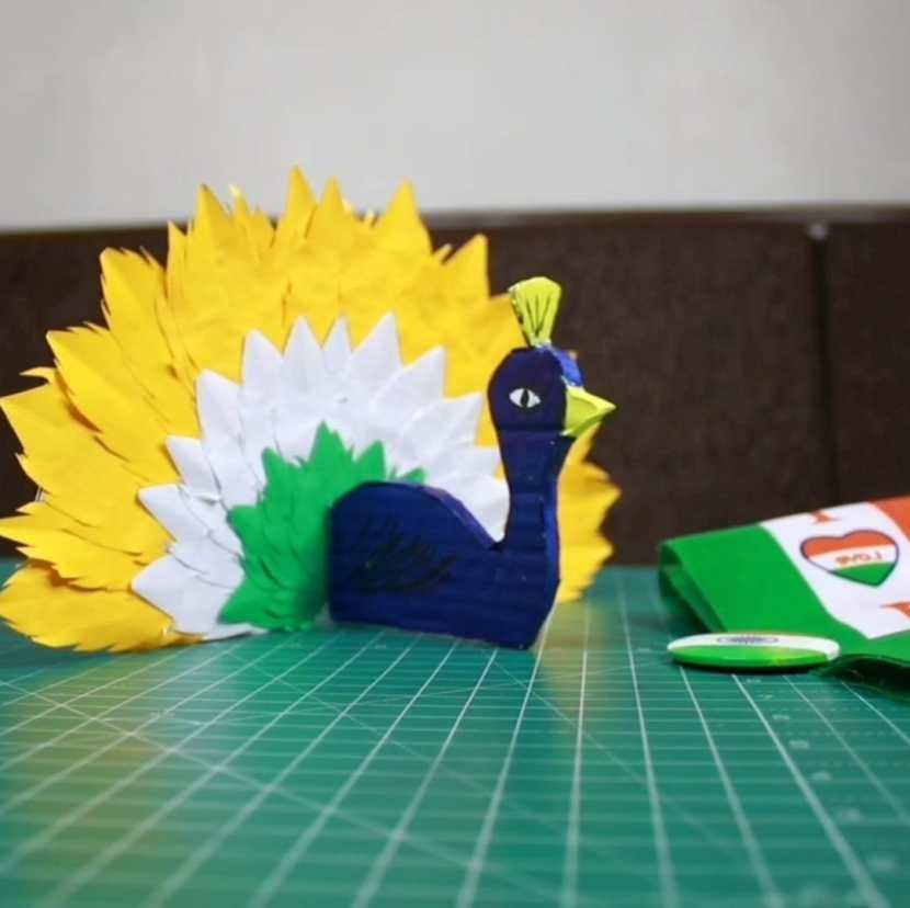 tricolor peacock