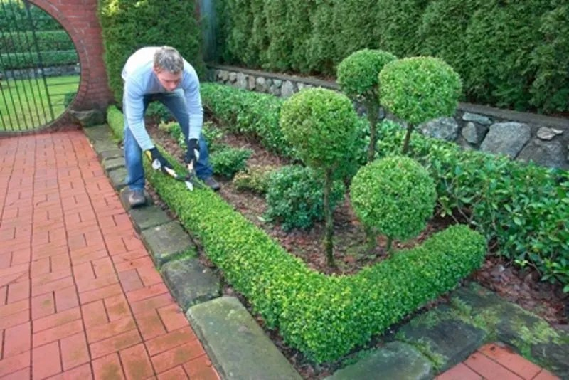 Trim Bushes and Kill Weeds Lawn Care