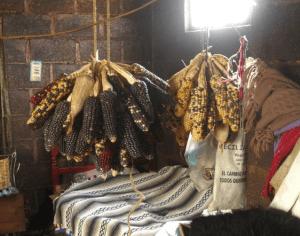 Maya Corn Drying in a Highlands Village