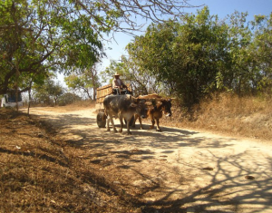 A farmer and his oxen haul supplies down a worn path in southern Mexico.