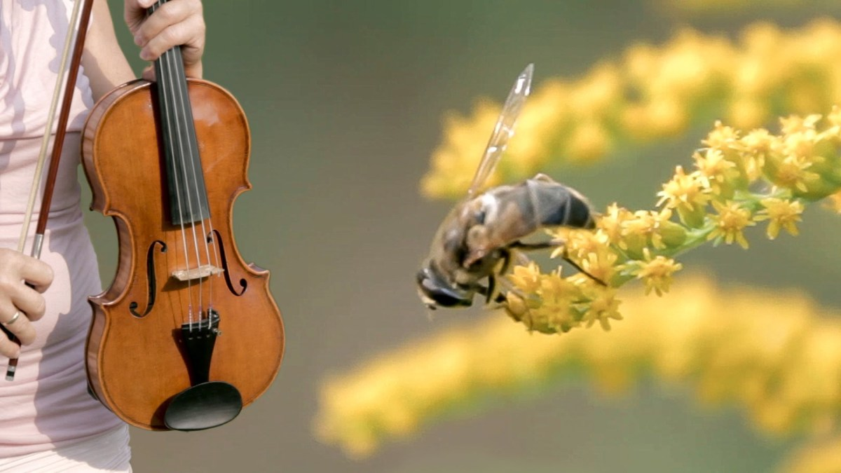 Die Biene (The Bee) - Franz Schubert