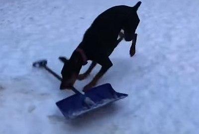 Hund eskaliert mit Schneeschaufel