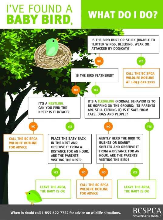 baby bird infographic
