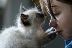Cute kitten nose to nose with a woman