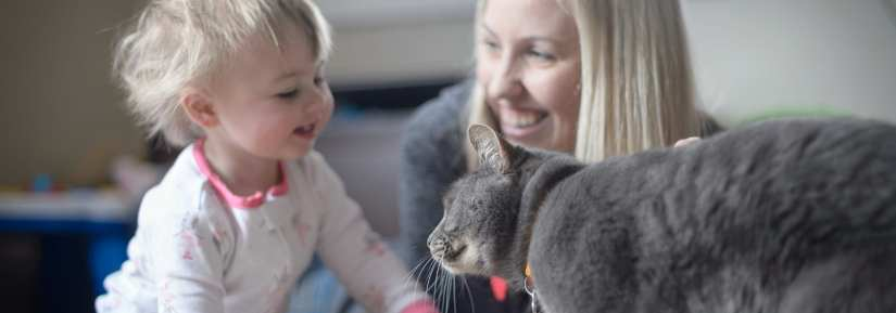 Grey cat wearing collar and id playing with a young baby and woman indoors