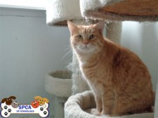 cat5_small