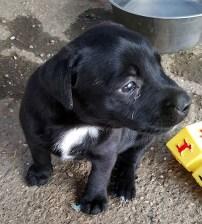puppy1a
