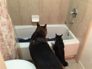 Buddies checking out the tub together.