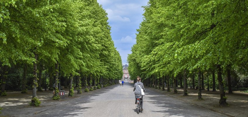 avenue, trees, away