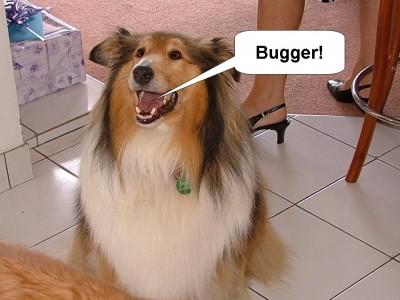 jodie-bugger