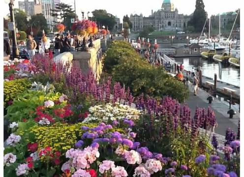 Beautiful flowers at the waterfront of Victoria