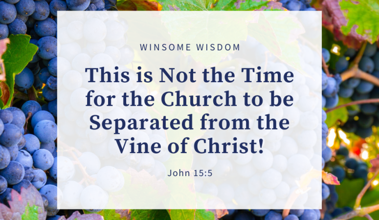The Vine of Christ