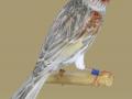 Agaatjaspis-rood-mozaiek-type-1