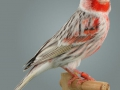 agaatpastel-rood-mozaike-type-2