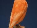 roodivoor-schimmel