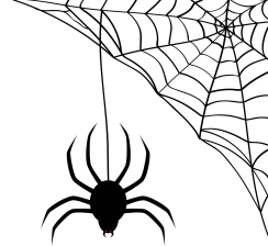 spider and corner web