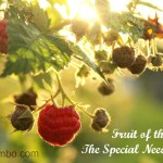 Fruit of the Spirit: the Special Needs Way