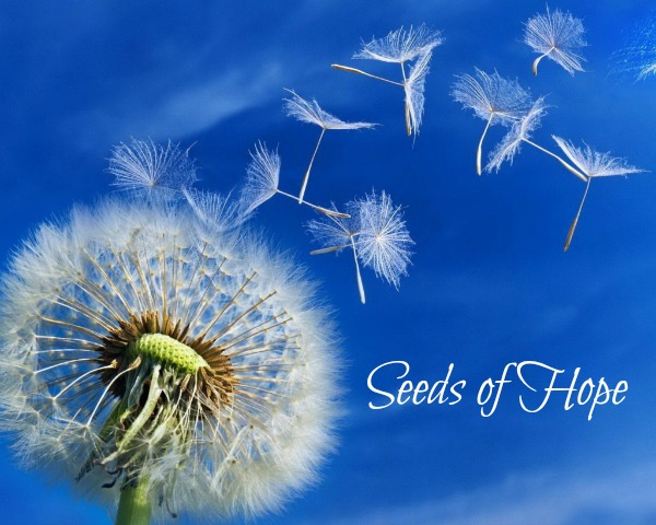 seeds of hope 2