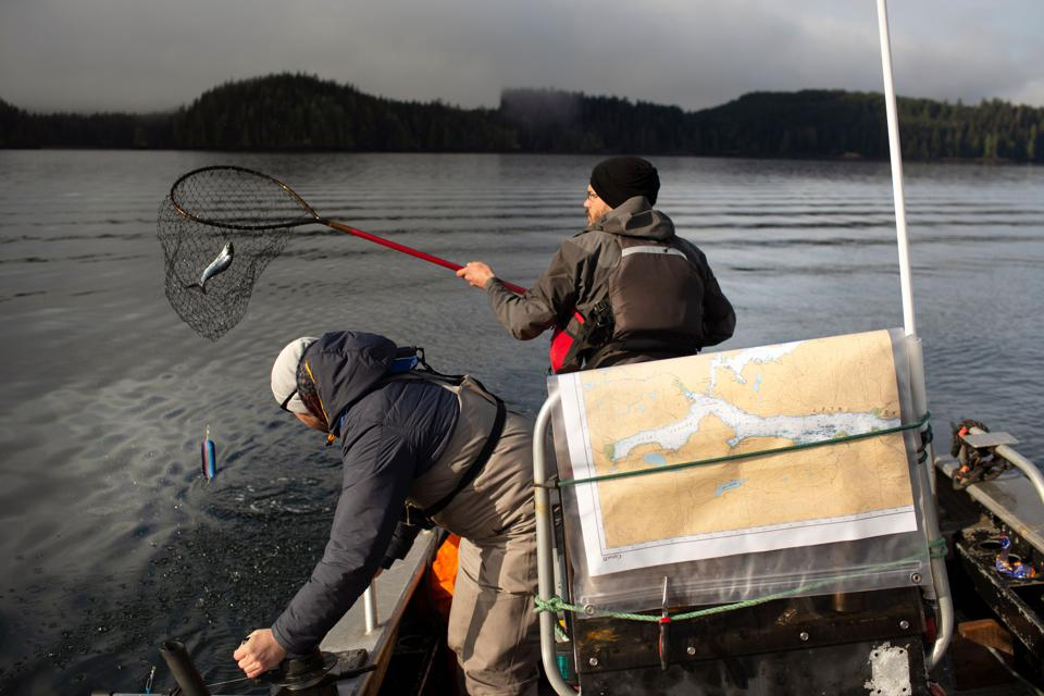 Scientists testing salmon for newly-discovered viruses.