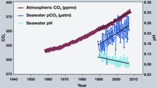 As dissolved carbon dioxide increases, the pH of seawater declines.