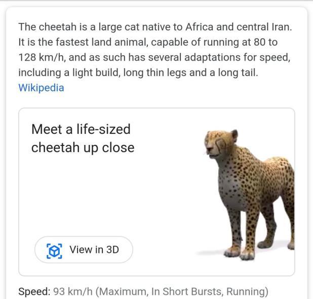 Google 3D meets a cheetah