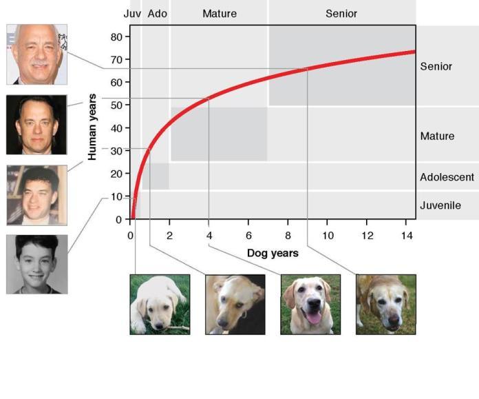 dog graph