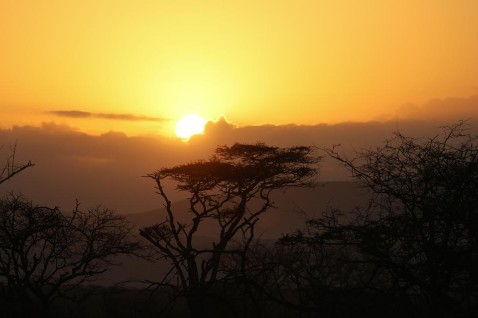 The sun at Thanda Safari in South Africa dips below the trees.
