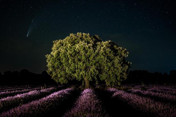 Comet NEOWISE is seen on a clear summer night atop a lavender field near the village of Brihuéga, Spain.  (Photo by Marcus Del Mazo / Lightrocket via Getty Image)