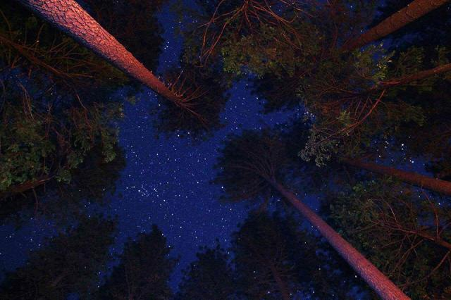 Stars above the towering redwoods in Redwoods National & State Parks