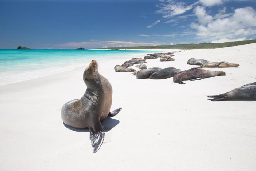 Galapagos Sea Lion lonely plane travel list bucket list travel