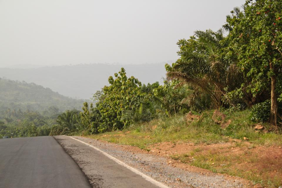 Toad Trip, Kpalime, Togo