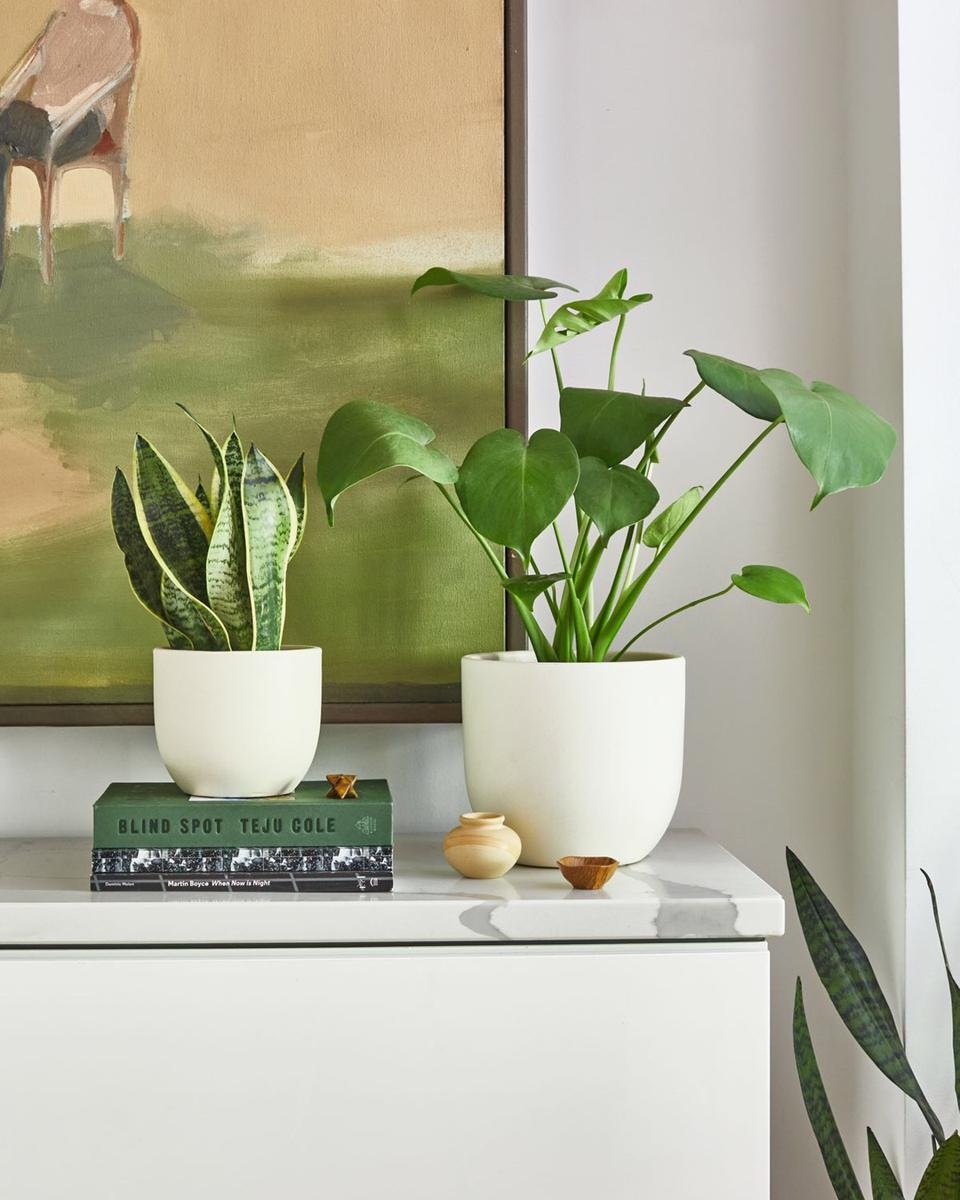 Indoor house plants from The Sill