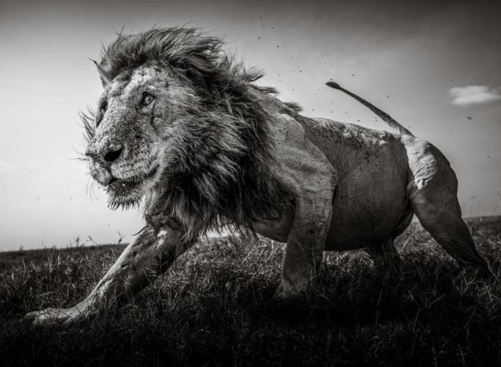 Sony Photo competition: iconic wild animals in close proximity