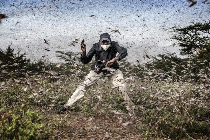Sony Photo competition: Locust Invasion in East Africa