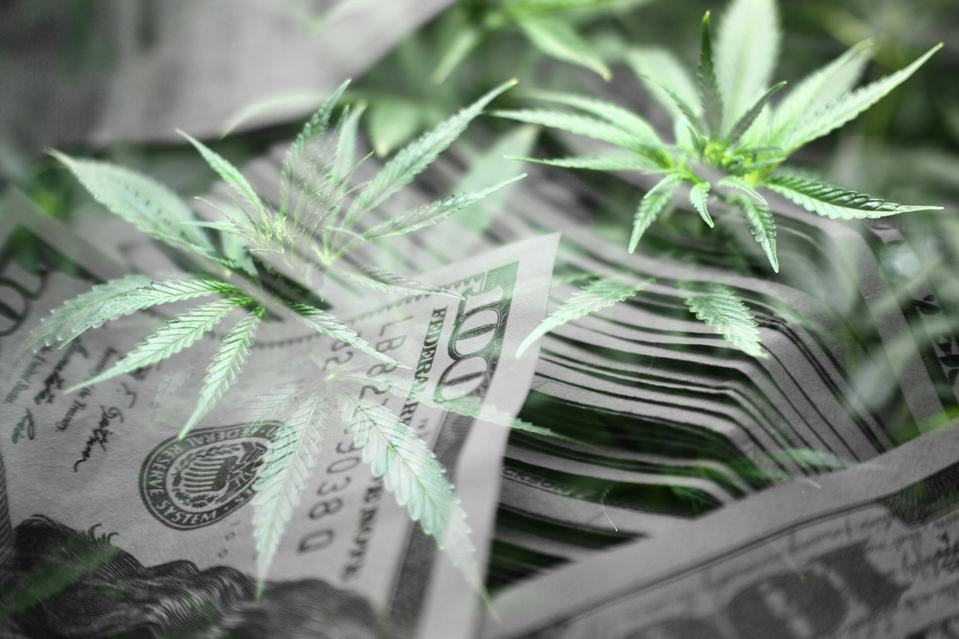 Cash Crop With Marijuana Leaves With Money In Black & White